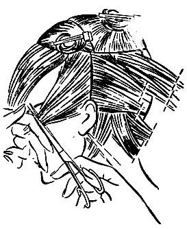 Рис. 49. Волосяной покров головы разделен на требуемые для стрижки участки