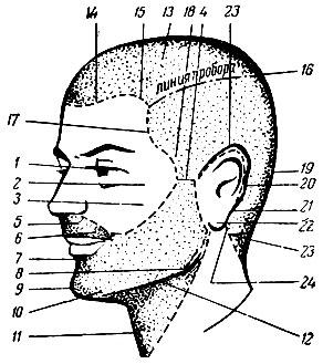 Рис. 92. Части лица и головы: 1 - угол глаза; 2 - скуловая выпуклость; 3 - подскуловая впадина; 4 - височная выпуклость (висок); 5 - носогубная впадина; 6 - угол рта; 7 - надподбородочная впадина; 8 - нижняя челюсть; 9 - подбородок; 10 - подбородочная впадина; 11 - гортань; 12 - подчелюстная впадина; 13 - теменная часть; 14 - лобный выступ; 15 - лобная выемка; 16 - макушка; 17 - височный выступ; 18 - височная впадина; /9 - затылок; 20 - краевая линия роста волос за ушной раковиной; 21 - сосцевидный отросток; 22 - мочка уха; 23 - окантовка волос на шее; 24 - шейный угол