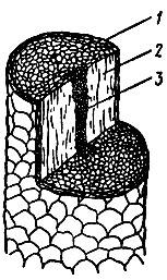 Рис. 2. Поперечное сечение волоса: 1 - наружный слой (кутикула), 2 - корковый слой, 3 - сердцевина