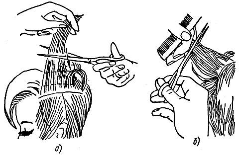 Рис. 50. Приемы филировки волос ножницами на различных участках волосяного покрова головы: а - теменного участка, б - затылочного участка