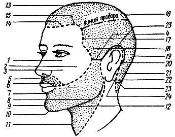 Рис. 66. Части лица и головы: 1 - угол глаза, 2 - скуловая выпуклость, 3 - подскуловая впадина, 4 - височная выпуклость, 5 - носогубная впадина, 6 - угол рта, 7 - надподбородочная впадина, 8 - нижняя челюсть, 9 - подбородок, 10 - подбородочная впадина, 11 - гортань, 12 - подчелюстная впадина, 13 - теменная часть, 14 - лобный выступ, 15 - лобная выемка, 16 - макушка, 17 - височный выступ, 18 - височная впадина, 19 - затылок, 20 - краевая линия роста волос за ушной раковиной, 21 - сосцевидный отросток, 22 - мочка уха, 23 -окантовка волос на шее, 24 - шейный угол